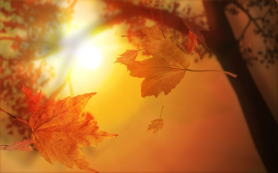 autumn leaves light